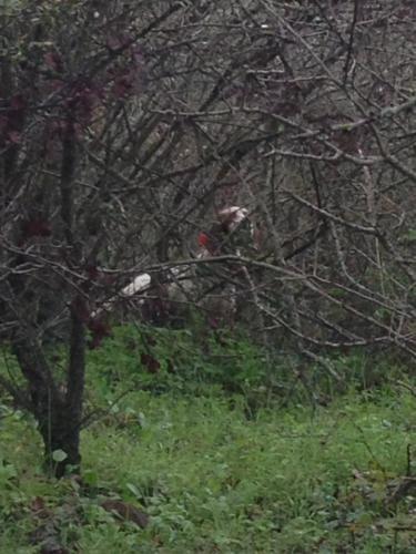 fred delle querce merizie su beccacce