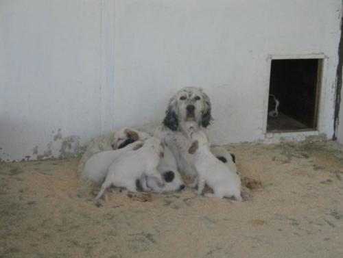 la gingerina ed i suoi cuccioli